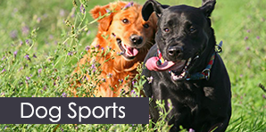 Dogs Running - Dog Training Services