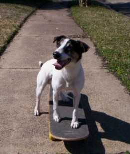 Dog on a Skateboard - Freestyle Classes